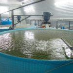 Как подобрать корм для рыбного хозяйства