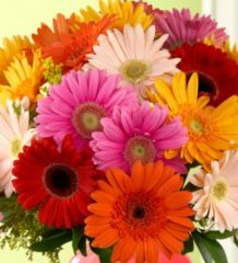 daisies-blog120824