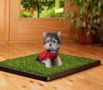 Приучить щенка к пеленке