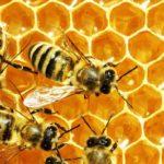 Что нужно для пчеловодства?