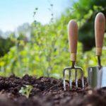 Гладиолусы, георгины, клубневые бегонии: проращиваем по лунному календарю 2017